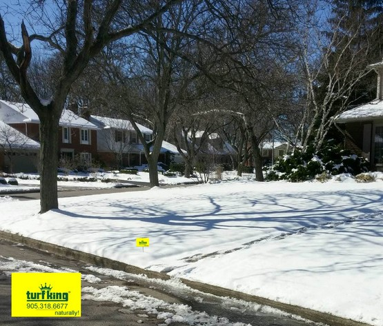 Snowy lawn care