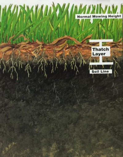 What is Lawn Thatch?