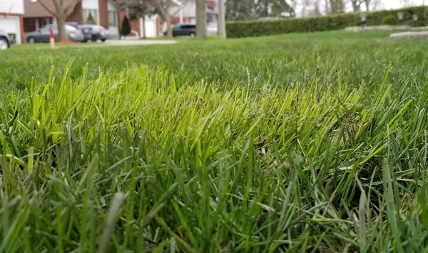 Light Green Grass?